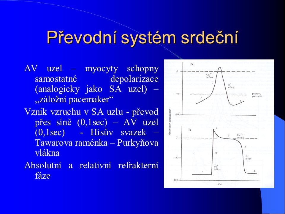 """Převodní systém srdeční AV uzel – myocyty schopny samostatné depolarizace (analogicky jako SA uzel) – """"záložní pacemaker Vznik vzruchu v SA uzlu - převod přes síně (0,1sec) – AV uzel (0,1sec) - Hisův svazek – Tawarova raménka – Purkyňova vlákna Absolutní a relativní refrakterní fáze"""