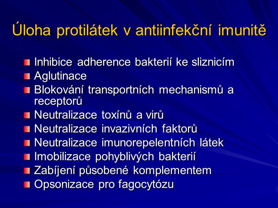 Úloha protilátek v antiinfekční imunitě Inhibice adherence bakterií ke sliznicím Aglutinace Blokování transportních mechanismů a receptorů Neutralizac