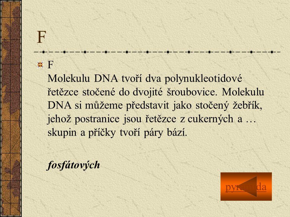 F F Molekulu DNA tvoří dva polynukleotidové řetězce stočené do dvojité šroubovice.