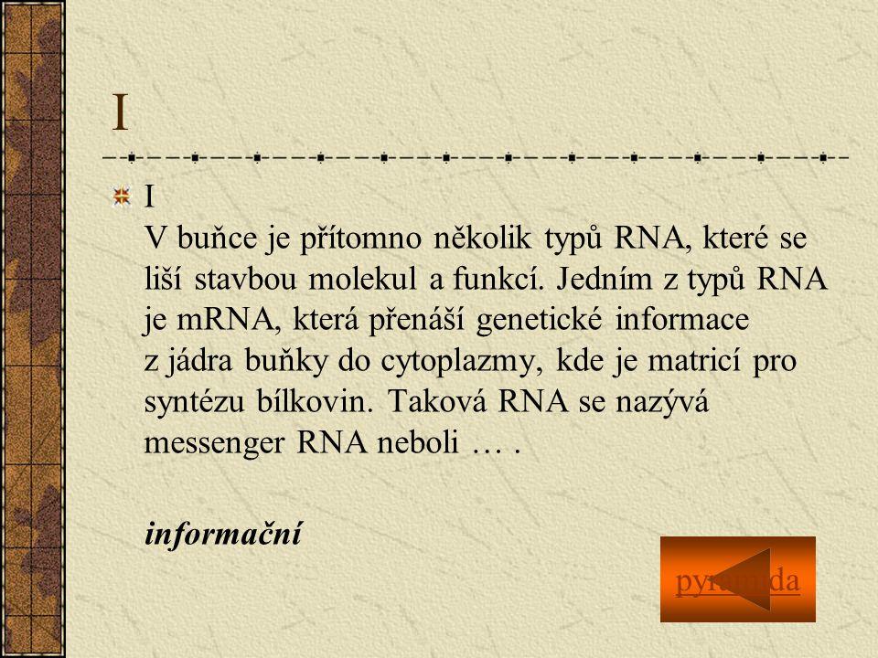 I I V buňce je přítomno několik typů RNA, které se liší stavbou molekul a funkcí.