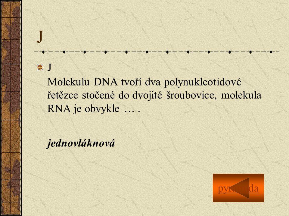 J J Molekulu DNA tvoří dva polynukleotidové řetězce stočené do dvojité šroubovice, molekula RNA je obvykle ….