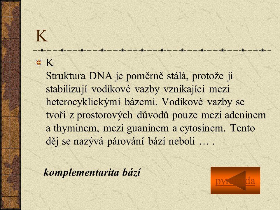 K K Struktura DNA je poměrně stálá, protože ji stabilizují vodíkové vazby vznikající mezi heterocyklickými bázemi.