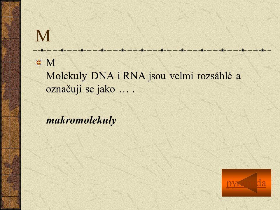 M M Molekuly DNA i RNA jsou velmi rozsáhlé a označují se jako …. makromolekuly pyramida