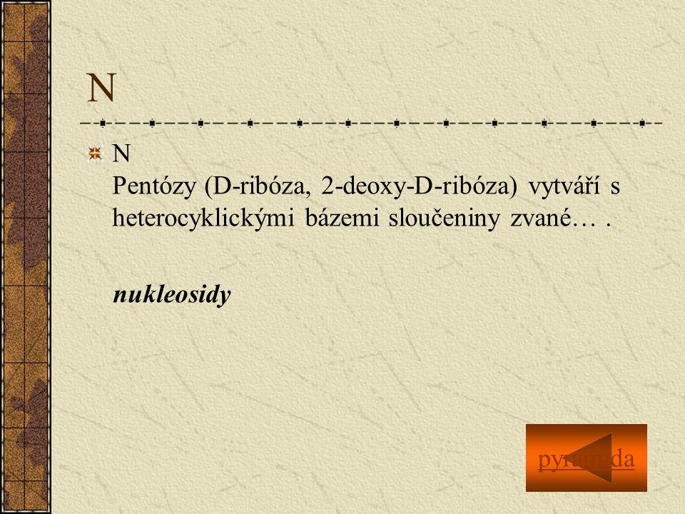 N N Pentózy (D-ribóza, 2-deoxy-D-ribóza) vytváří s heterocyklickými bázemi sloučeniny zvané….
