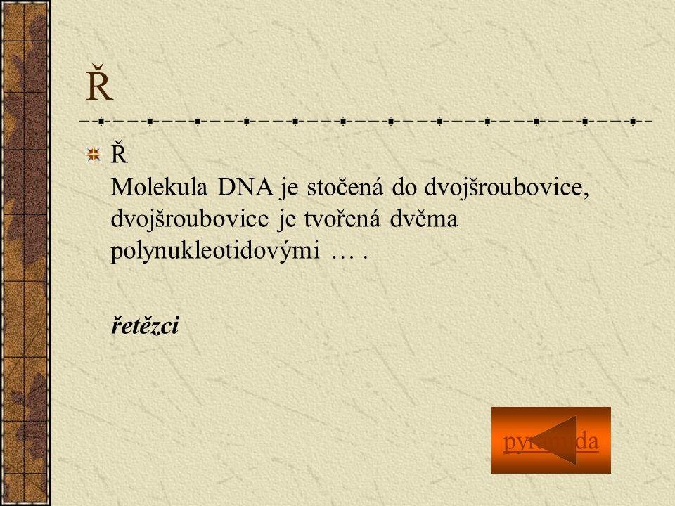 Ř Ř Molekula DNA je stočená do dvojšroubovice, dvojšroubovice je tvořená dvěma polynukleotidovými ….