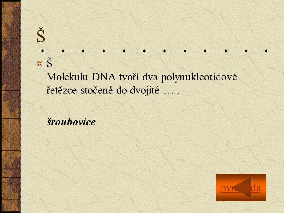 Š Š Molekulu DNA tvoří dva polynukleotidové řetězce stočené do dvojité …. šroubovice pyramida