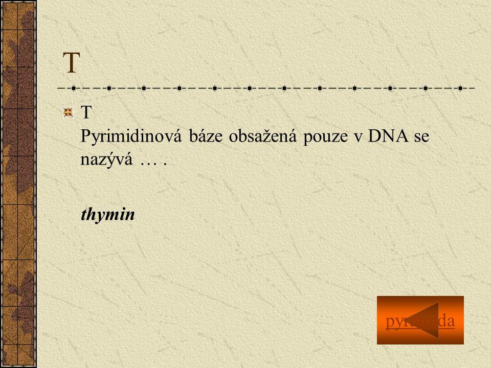 T T Pyrimidinová báze obsažená pouze v DNA se nazývá …. thymin pyramida