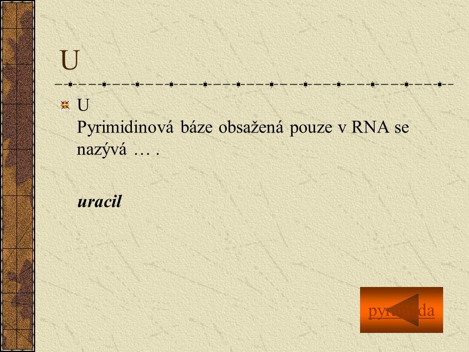 U U Pyrimidinová báze obsažená pouze v RNA se nazývá …. uracil pyramida