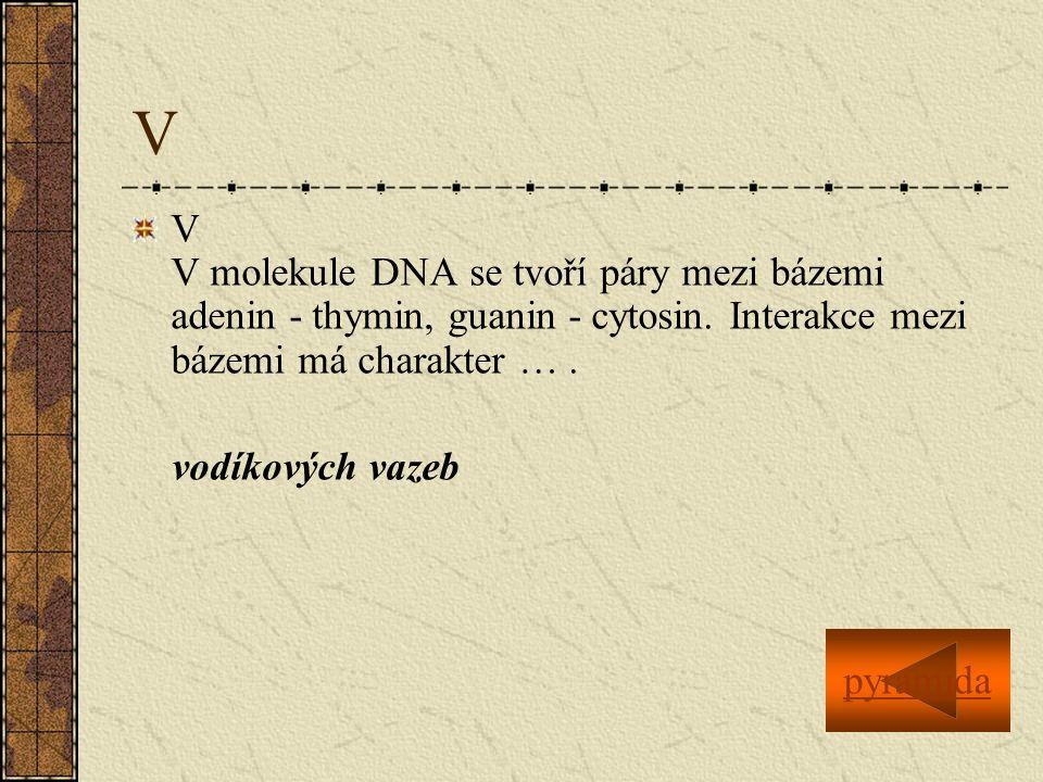 V V V molekule DNA se tvoří páry mezi bázemi adenin - thymin, guanin - cytosin.