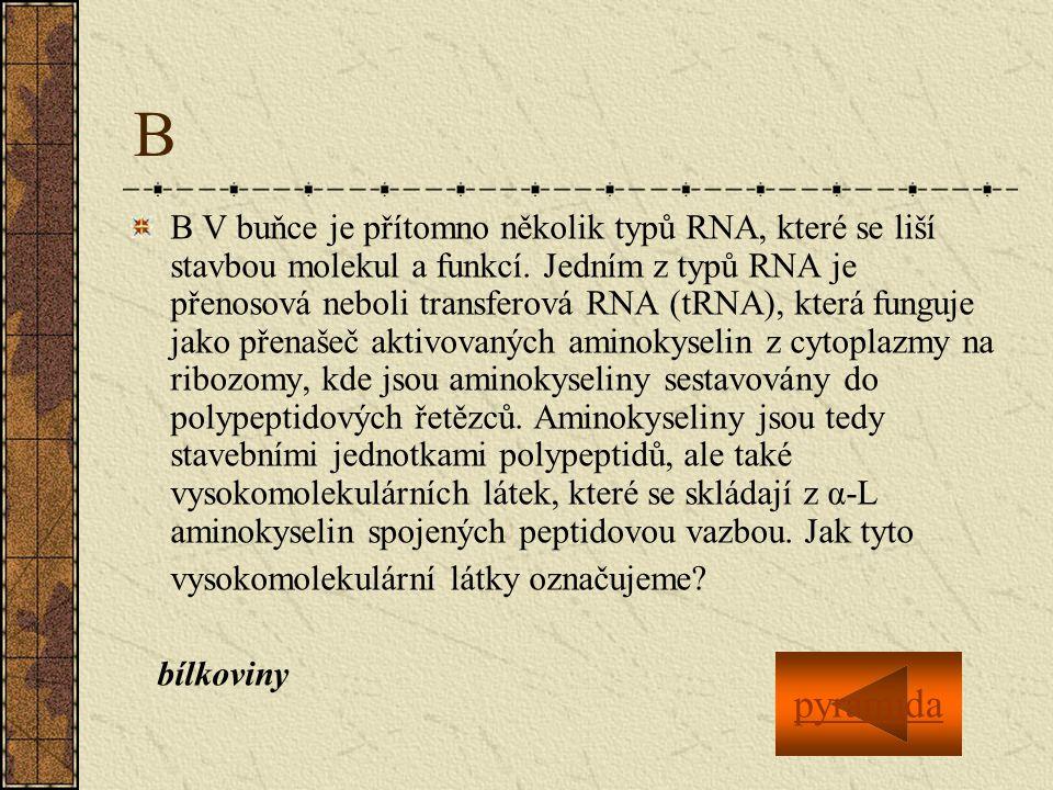 B B V buňce je přítomno několik typů RNA, které se liší stavbou molekul a funkcí.