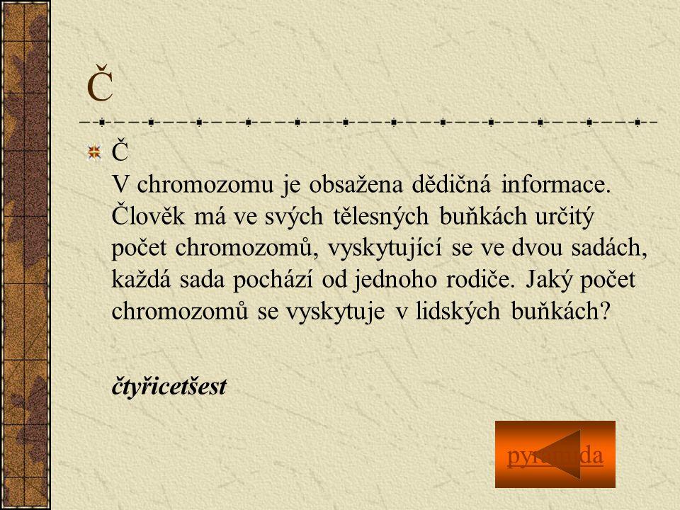 Č Č V chromozomu je obsažena dědičná informace.