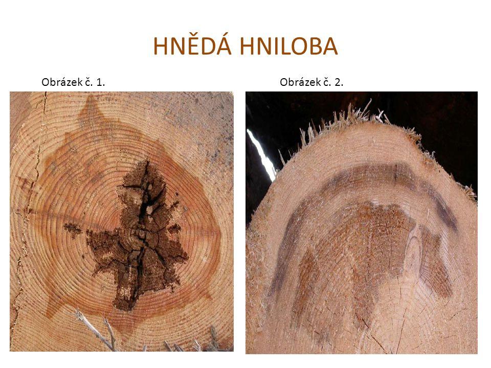 Druhy hniloby podle zbarvení BÍLÁ HNILOBA vyskytuje se převážně u jehličnatých dřevin napadené dřevo se jeví jako světlejší – nažloutlé, bílé, bílošedé vzniká tzv.