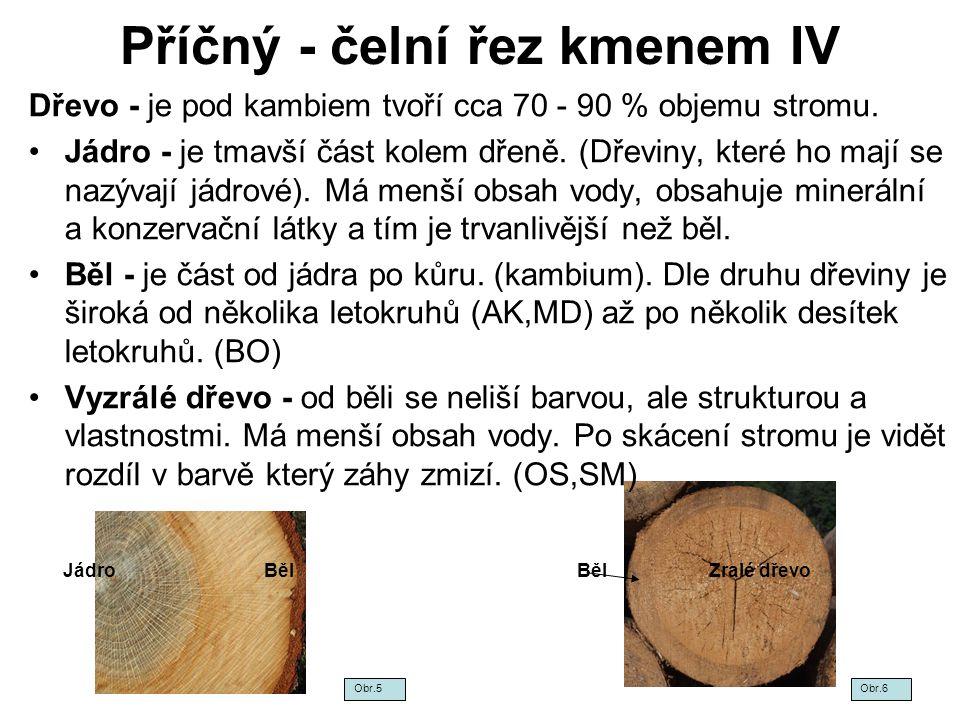 Příčný - čelní řez kmenem V Podle zastoupení jednotlivých části v kmeni dělíme dřeviny na : Jádrové - (mají běl a jádro) –Jehličnaté - BO, MD, TIS, DG, BV –Listnaté tvrdé - DB, AK, JS, JM, OR, většina ovocných –Listnaté měkké - TP, VB Jádrové - (mají běl a jádro a vyzrálé dřevo) –Jehličnaté –Listnaté tvrdé - JS, JM –Listnaté měkké - VB Bělové - ( nemají jádro, ani vyzrálé dřevo) –Jehličnaté –Listnaté tvrdé - BR, JV, HB –Listnaté měkké - OL S vyzrálým dřevem - (mají běl a vyzrálé dřevo) –Jehličnaté - SM, JD –Listnaté tvrdé - BK –Listnaté měkké - LP, OS