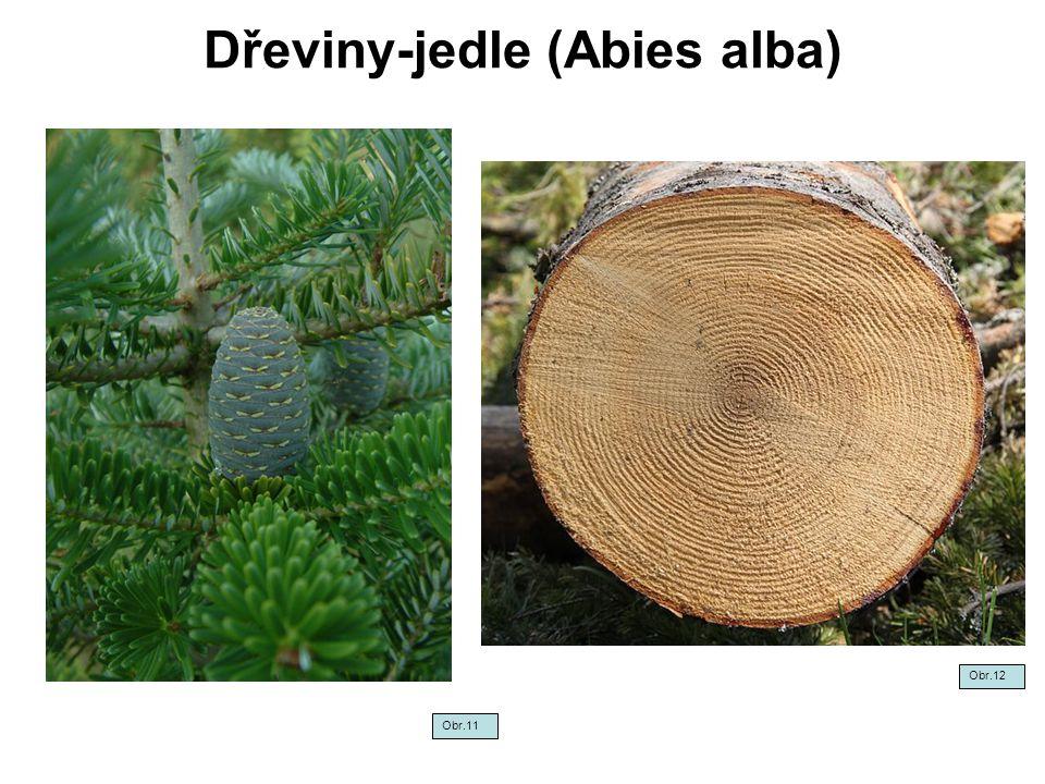 Dřeviny-jedle (Abies alba) Obr.12 Obr.11