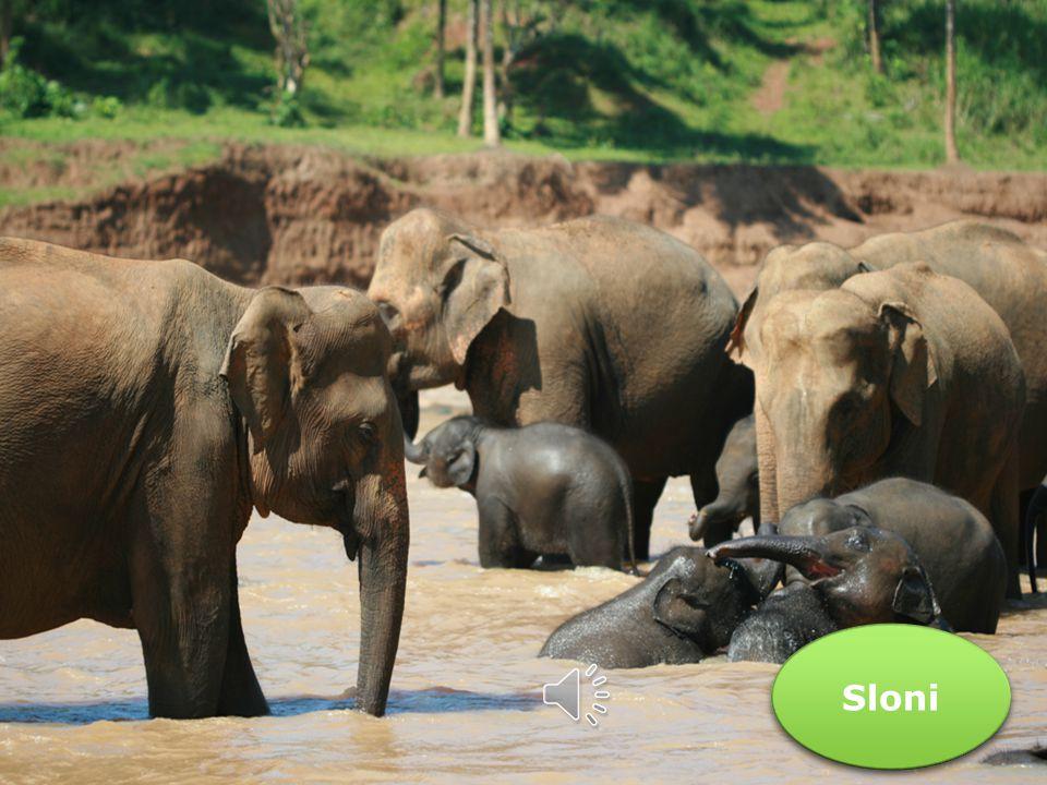Nedrážděte slona.