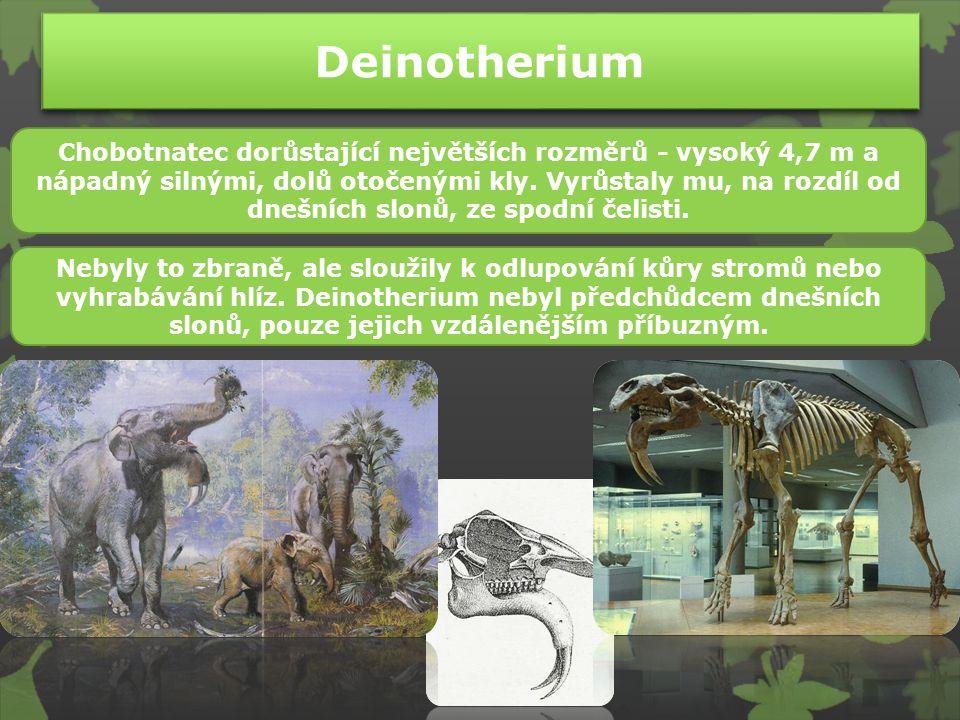 Kdo patřil do neogénu? Thylacosmilus Eusmilus Phorusrhacos Titanis Eurhinodelphis