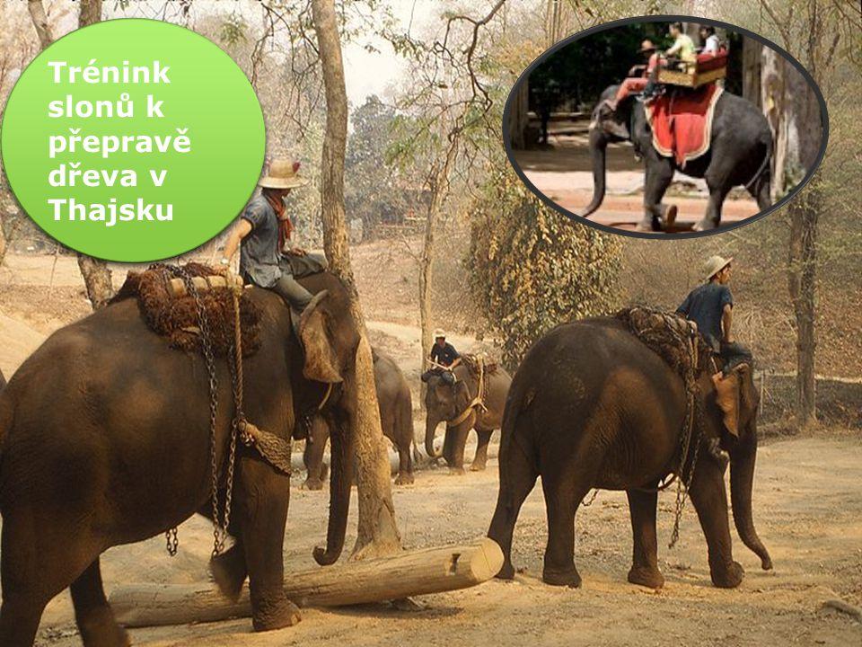 Sloní kostra