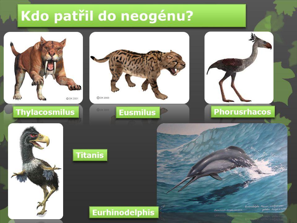 Kolik nohou má slon na obrázku?