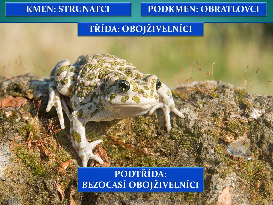 14 Snímek č.1 – Žába.