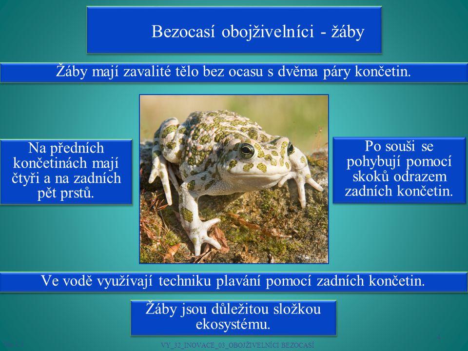 Bezocasí obojživelníci - žáby Žáby mají zavalité tělo bez ocasu s dvěma páry končetin.