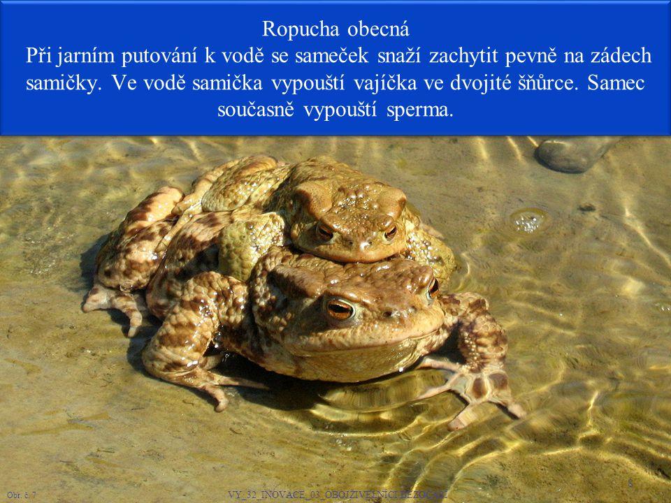 9 Ropucha obecná je velká, neohrabaná a silná žába s příušními jedovými žlázami V případě ohrožení vylučuje ostrý dráždivý sekret.