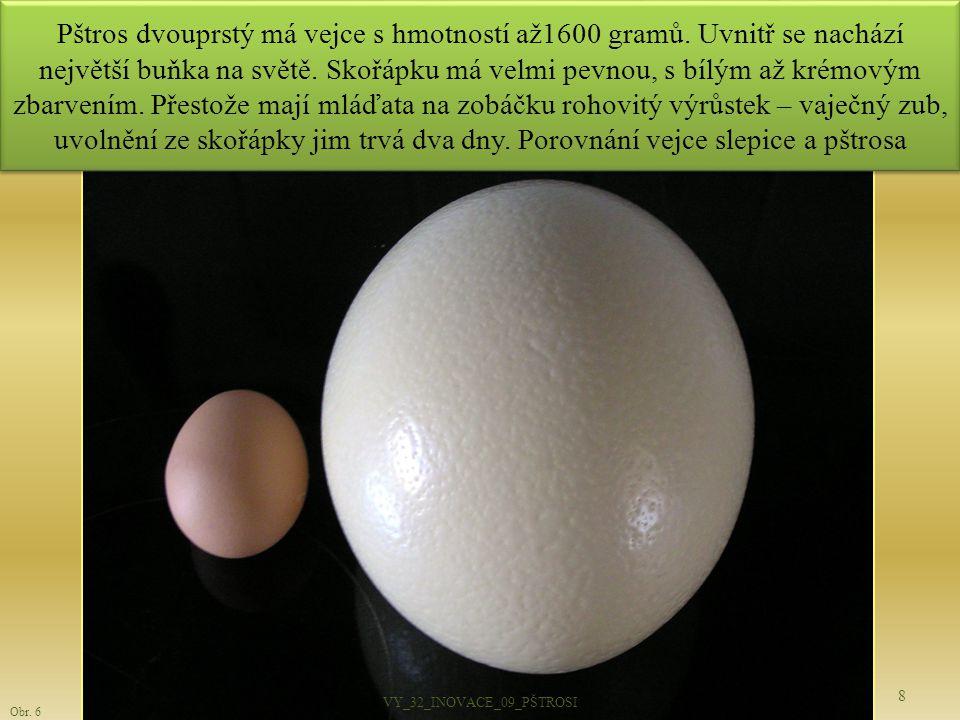 Pštros dvouprstý má vejce s hmotností až1600 gramů. Uvnitř se nachází největší buňka na světě. Skořápku má velmi pevnou, s bílým až krémovým zbarvením