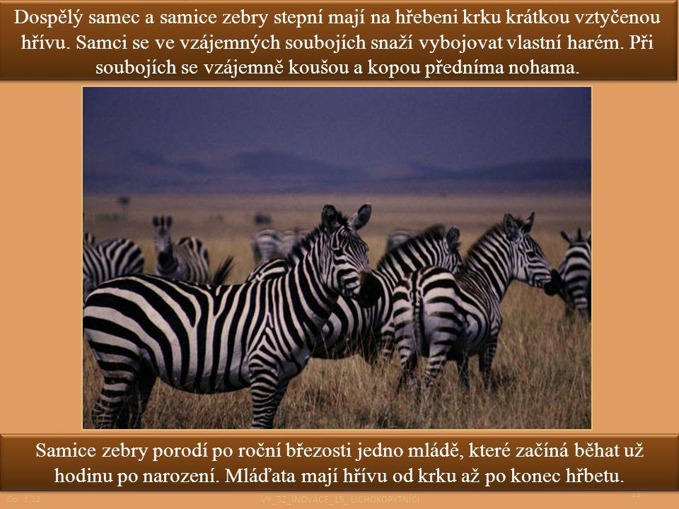 13 Dospělý samec a samice zebry stepní mají na hřebeni krku krátkou vztyčenou hřívu. Samci se ve vzájemných soubojích snaží vybojovat vlastní harém. P