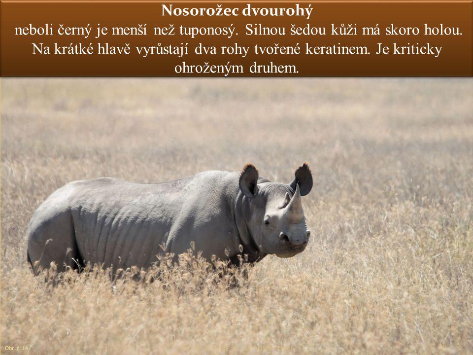 Nosorožec dvourohý neboli černý je menší než tuponosý. Silnou šedou kůži má skoro holou. Na krátké hlavě vyrůstají dva rohy tvořené keratinem. Je krit