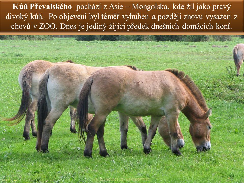 Kůň Převalského pochází z Asie – Mongolska, kde žil jako pravý divoký kůň. Po objevení byl téměř vyhuben a později znovu vysazen z chovů v ZOO. Dnes j