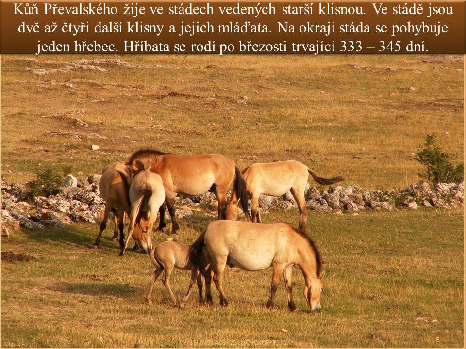Kůň Převalského žije ve stádech vedených starší klisnou. Ve stádě jsou dvě až čtyři další klisny a jejich mláďata. Na okraji stáda se pohybuje jeden h