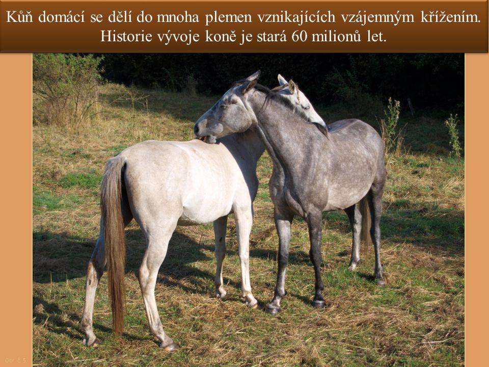 Kůň domácí se dělí do mnoha plemen vznikajících vzájemným křížením. Historie vývoje koně je stará 60 milionů let. 6 Obr. č. 5 VY_32_INOVACE_15_ LICHOK