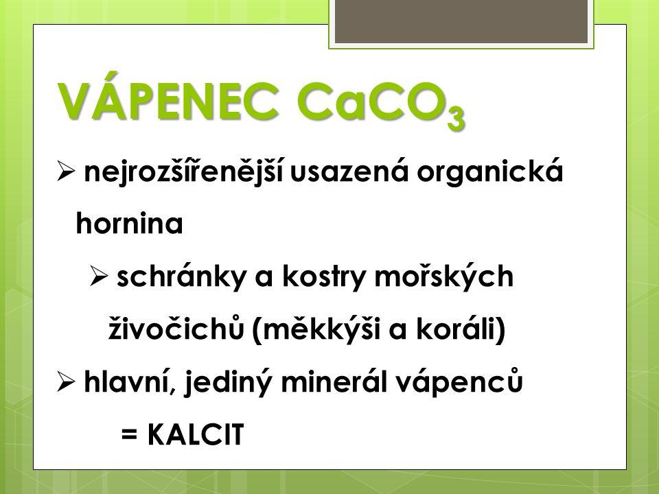 VÁPENEC CaCO 3  nejrozšířenější usazená organická hornina  schránky a kostry mořských živočichů (měkkýši a koráli)  hlavní, jediný minerál vápenců
