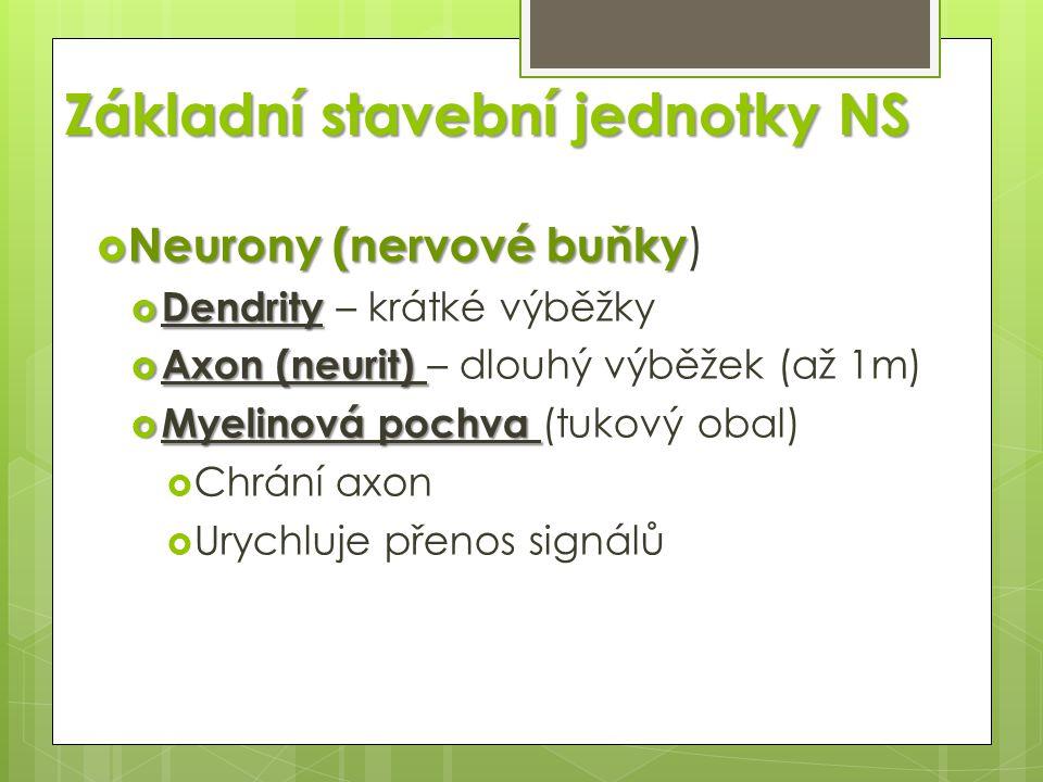 Základní stavební jednotky NS  Neurony (nervové buňky  Neurony (nervové buňky )  Dendrity  Dendrity – krátké výběžky  Axon (neurit)  Axon (neuri
