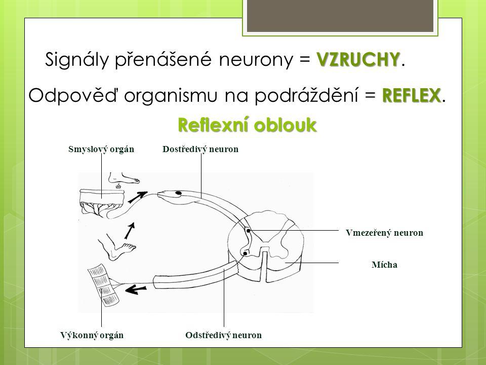 VZRUCHY Signály přenášené neurony = VZRUCHY. REFLEX Odpověď organismu na podráždění = REFLEX. Vmezeřený neuron Mícha Výkonný orgánOdstředivý neuron Do