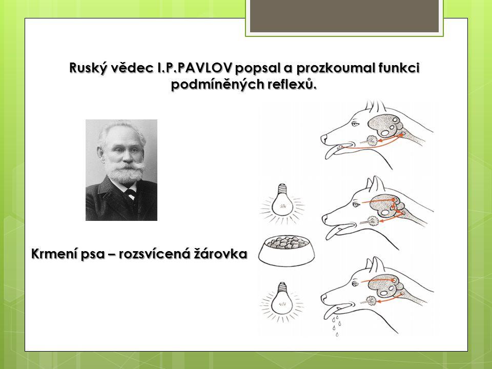 Ruský vědec I.P.PAVLOV popsal a prozkoumal funkci podmíněných reflexů. Krmení psa – rozsvícená žárovka