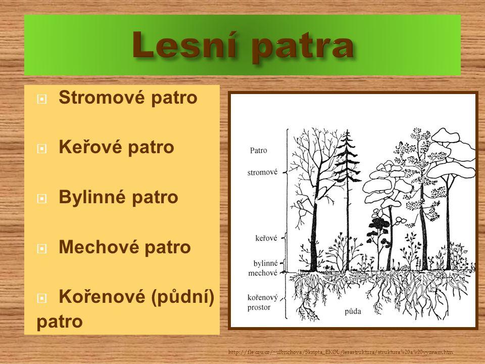  Stromové patro  Keřové patro  Bylinné patro  Mechové patro  Kořenové (půdní) patro http://fle.czu.cz/~ulbrichova/Skripta_EKOL/lesastruktura/stru