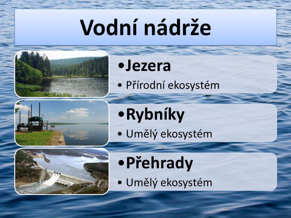 Živočichové v rybníku a jeho okolí