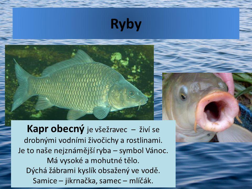 Ryby Kapr obecný je všežravec – živí se drobnými vodními živočichy a rostlinami. Je to naše nejznámější ryba – symbol Vánoc. Má vysoké a mohutné tělo.
