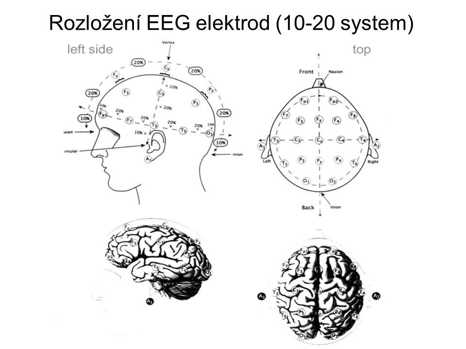 Rozložení EEG elektrod (10-20 system)