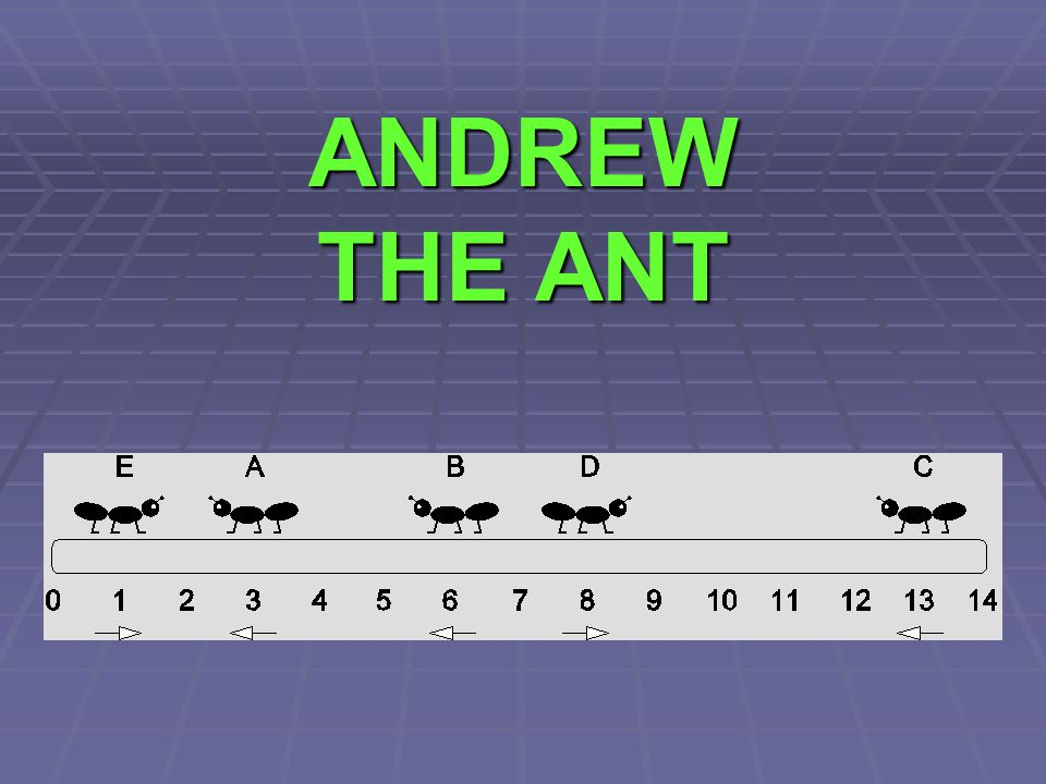 ANDREW THE ANT