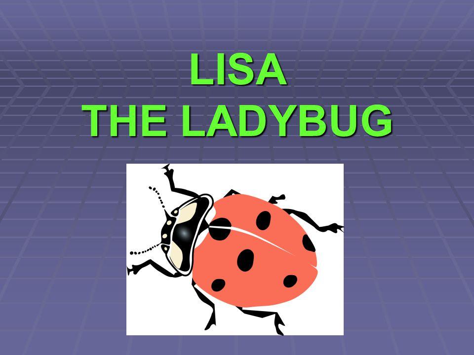 LISA THE LADYBUG