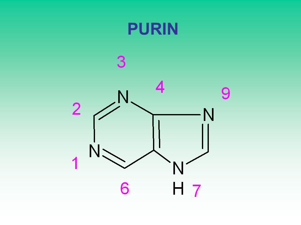 PURIN