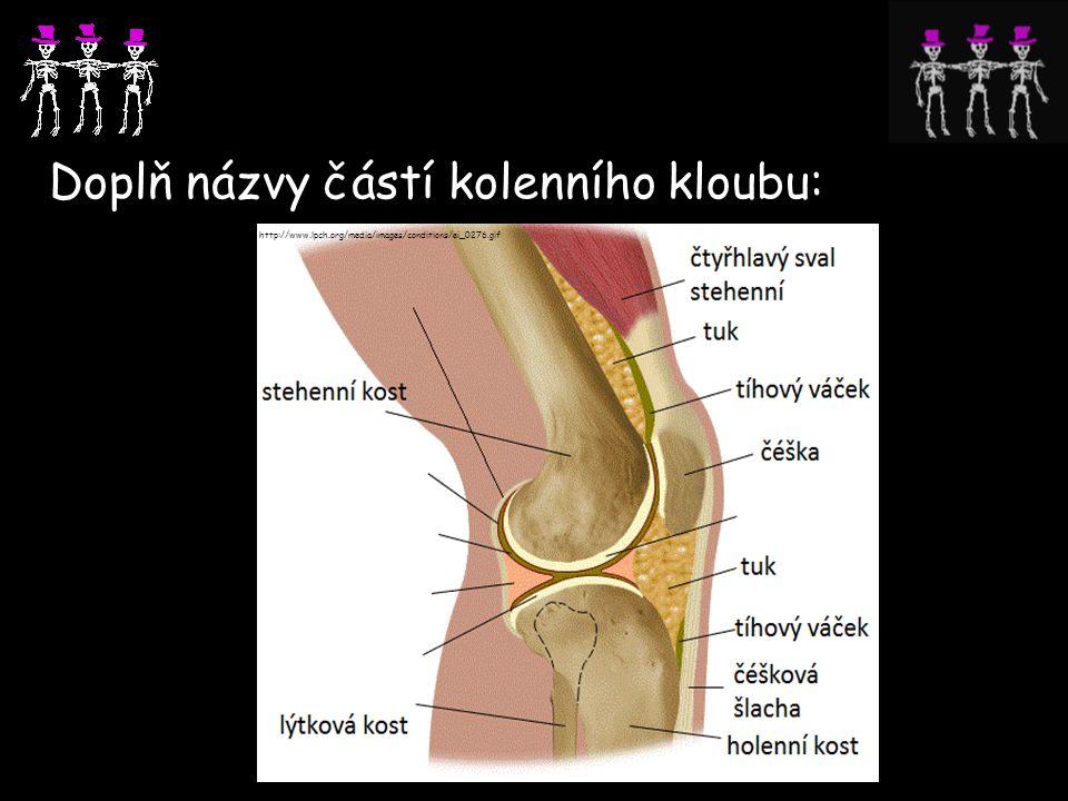 Doplň názvy částí kolenního kloubu: http://www.lpch.org/media/images/conditions/ei_0276.gif