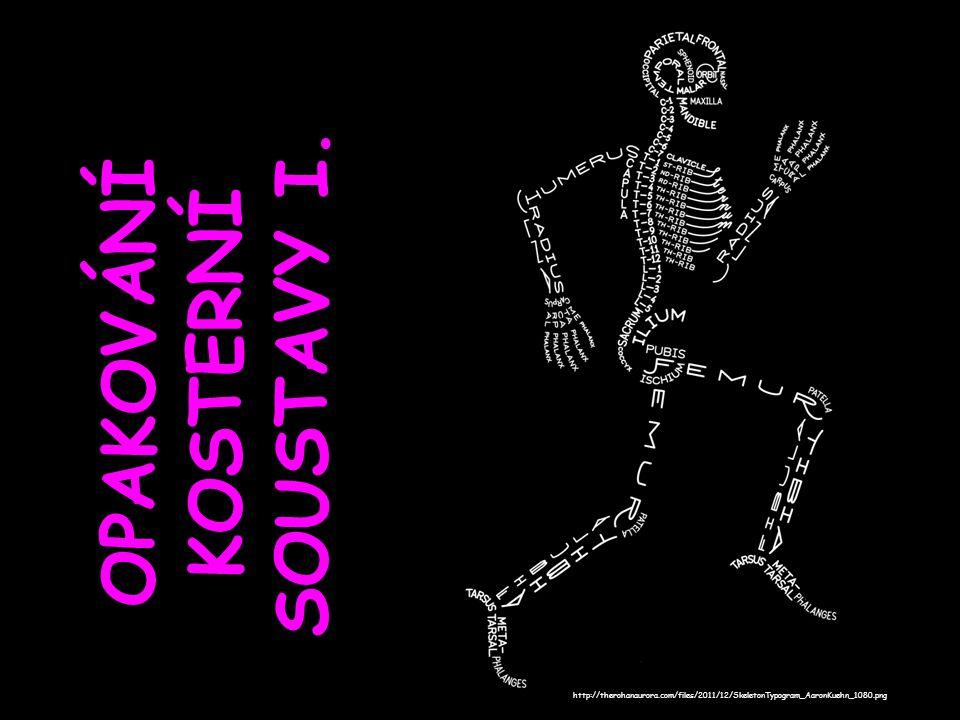 OPAKOVÁNÍ KOSTERNÍ SOUSTAVY I. http://therohanaurora.com/files/2011/12/SkeletonTypogram_AaronKuehn_1080.png