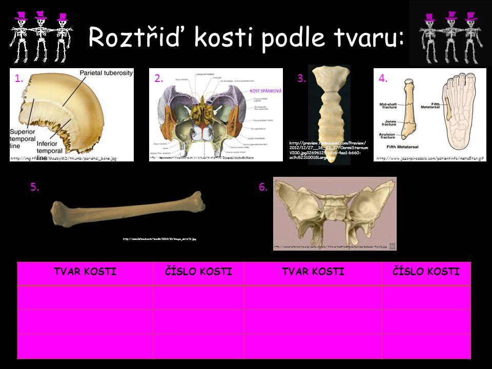 Roztřiď kosti podle tvaru: 1.2.3.4.5.6.