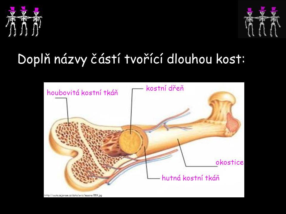 Doplň názvy částí tvořící dlouhou kost: http://vyuka.zsjarose.cz/data/swic/lessons/559.jpg houbovitá kostní tkáň hutná kostní tkáň okostice kostní dře