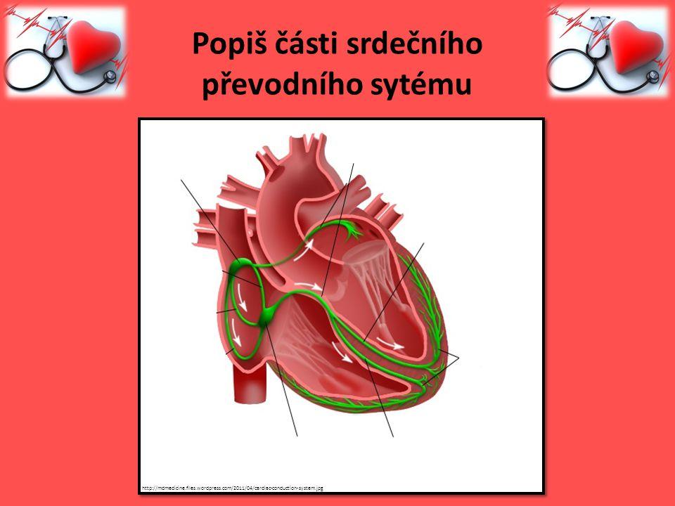 Popiš části srdečního převodního sytému http://mdmedicine.files.wordpress.com/2011/04/cardiac-conduction-system.jpg