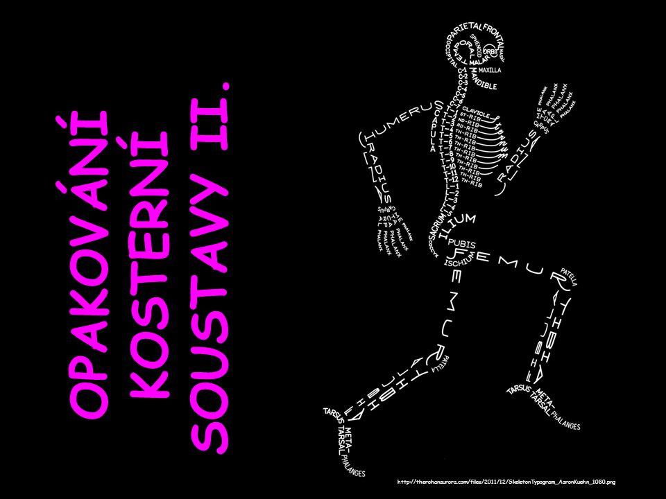 OPAKOVÁNÍ KOSTERNÍ SOUSTAVY II. http://therohanaurora.com/files/2011/12/SkeletonTypogram_AaronKuehn_1080.png