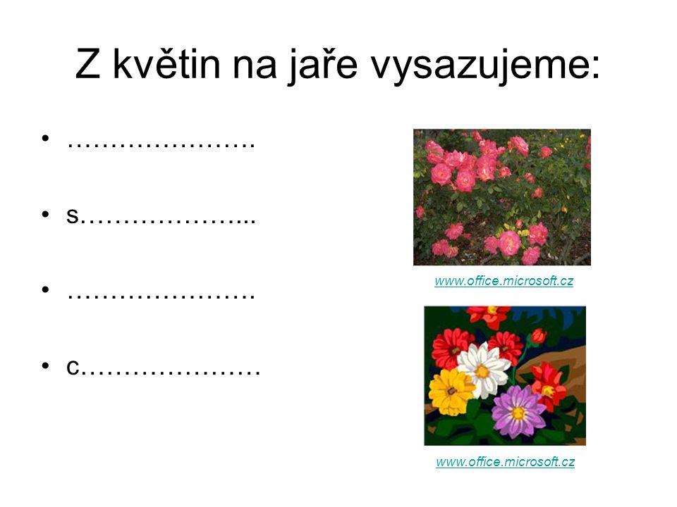 Z květin na jaře vysazujeme: …………………. s………………... …………………. c………………… www.office.microsoft.cz