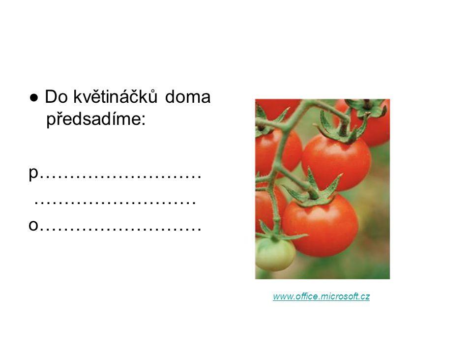 ● Do květináčků doma předsadíme: p……………………… ……………………… o……………………… www.office.microsoft.cz